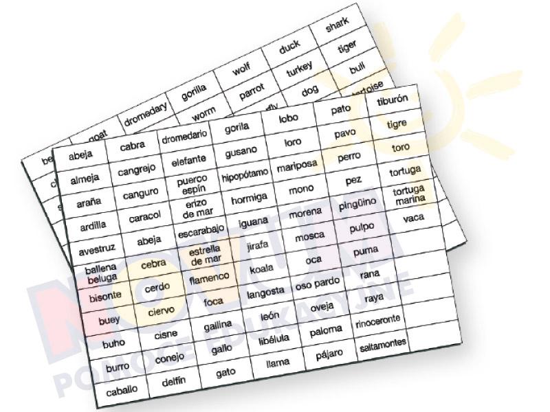 Novum Lotto zwierzęta-wersja w j.ang